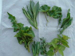 Stinging nettle, in the bottom right, is a great food for milk production